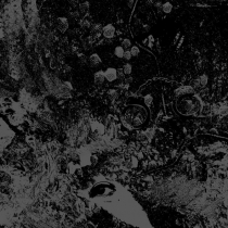 Primitive Man split